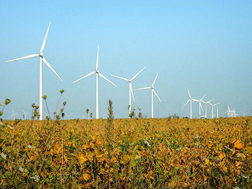 Row of wind turbines in a field of yellow flowers and plants